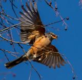 A robins Christmas dinner