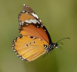 Monarch last light South Africa