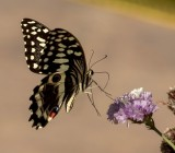 The delicate touch of a butterfly in flight