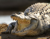 Southern Africa Reptiles