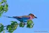 Southern Africa Birds