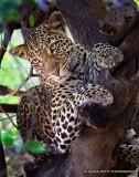 Southern Africa Mammals