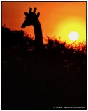 Sunrises Sunsets of Southern Africa