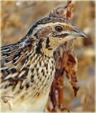 Bird Photographs 2016