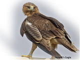 Eagle Bonellis