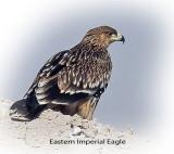 Eagle Eastern Imperial