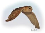 Owl Barn 1.jpg