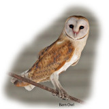 Owl Barn.jpg
