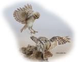 Owls Lilith Little.jpg