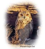 Owl Pharaoh Eagle 1.jpg