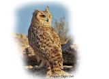 Owl Pharaoh Eagle.jpg