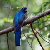 Birds of Suriname 2014