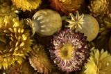 driedflowers-A7RII.jpg