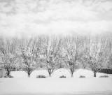 Backyard Winter Scene