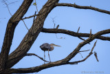 Bird on a stick.