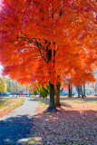 Fiery fall colors!