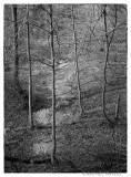 Perkiomen Trail, Green Lane, Pennsylvania.