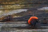 Champignon / Fungi