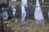 Ti-Q * N'avait pas peur de l'eau ni de Grrrrrr!