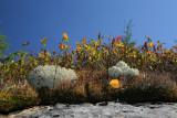 Lichen et mousse / Pour créer des arbres miniatures