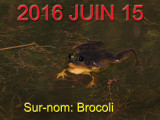 Frog with black eyes / Grenouille avec les yeux noirs