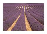 Parfum de Provence - July 2014