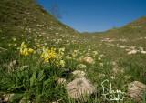 valleyrocks4436_websig.jpg