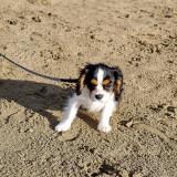 Baillie at the beach