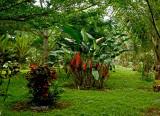 Garden at Bombaim Hotel