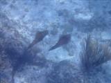 ZEEKAT - Reef Squid - Sekat buladó