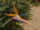 Bird of Paradise botanic gardens