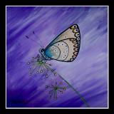 Blauwtje - Lycaenidae
