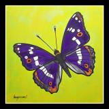Kleine weerschijnvlinder- Apatura ilia