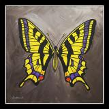 Koninginnepage -Papilio alexanor