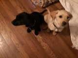 2 additions to Peppers' Puppy Patch