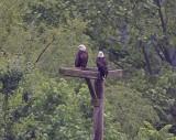 Wheeler National Wildlife Refuge - 05/18/201