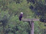 Wheeler National Wildlife Refuge - 08/05/2013