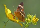 Wheeler National Wildlife Refuge - 09/05/2013