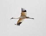 Wheeler National Wildlife Refuge - 11/15/2013