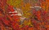 Wheeler National Wildlife Refuge - 11/18/2013