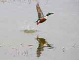 Wheeler National Wildlife Refuge - 02/08/2014