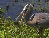 Wheeler National Wildlife Refuge - 04/23/2014