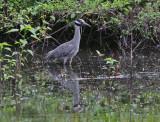 Wheeler National Wildlife Refuge - 06/02/2014