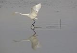 Wheeler National Wildlife Refuge - n09/04/2014