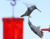 Hummingbirds for 2014