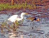 Wheeler National Wildlife Refuge - 09/22/2014
