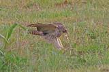 Wheeler National Wildlife Refuge - 10/06/2014