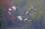 Wheeler National Wildlife Refuge - 11/12/2014
