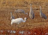 Wheeler National Wildlife Refuge - 11/19/2014