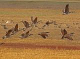 Wheeler National Wildlife Refuge - 11/21/2014